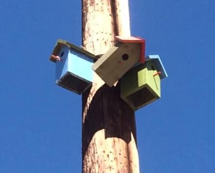 california-oakland-telephone-poles-birdhouses-sacramento