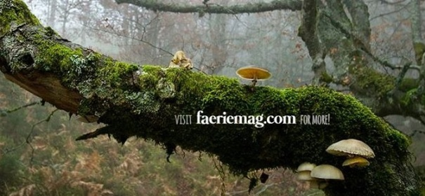 maryland-baltimore-fairie-magazine-tree-branch