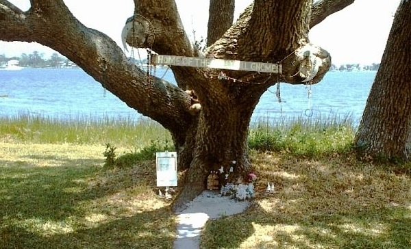 florida-holly-hill-gnome-tree-water